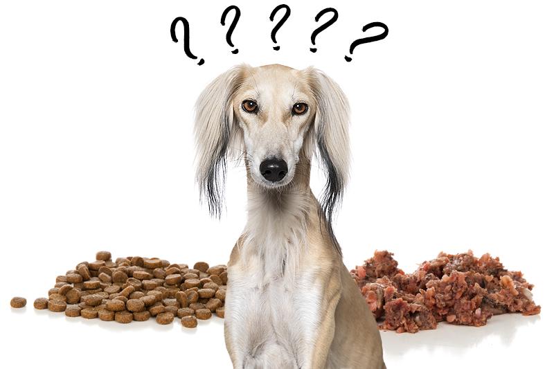 Hond met vraagtekens voor Overschakelen naar een nieuwe voeding